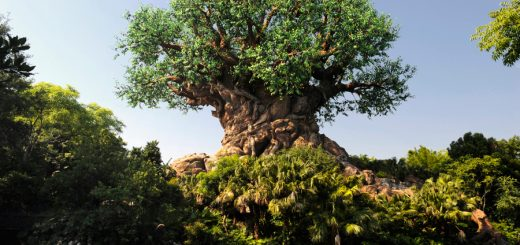Animal Kingdom attractions that you can't miss