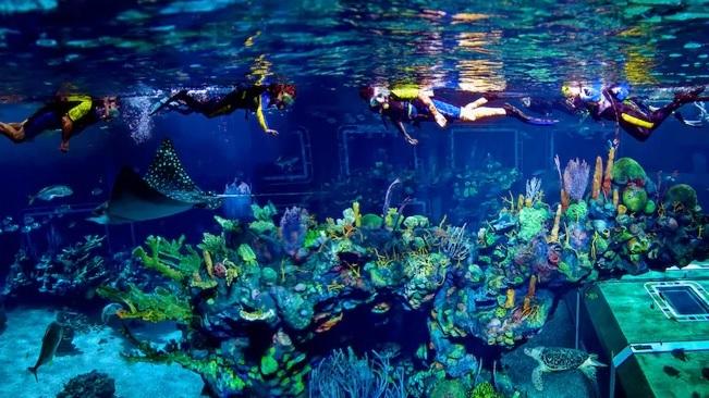 Epcot Seas Adventure - Aqua Tour