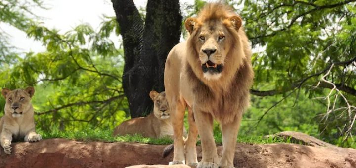 Animal Kingdom animals