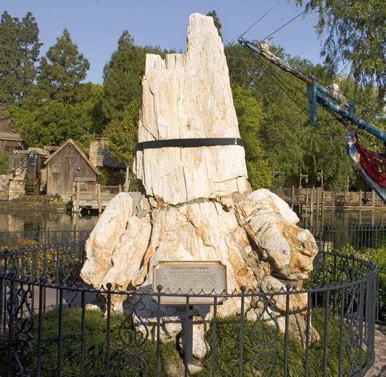 Disneyland petrified tree