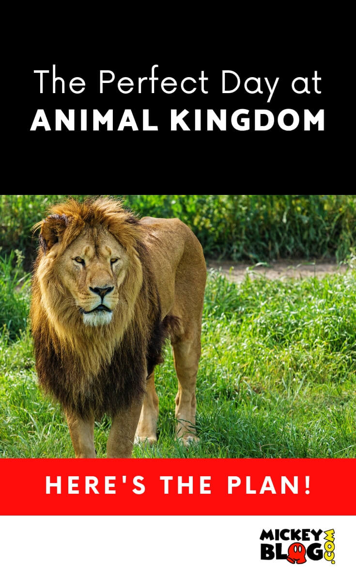 Perfect Day at Animal Kingdom