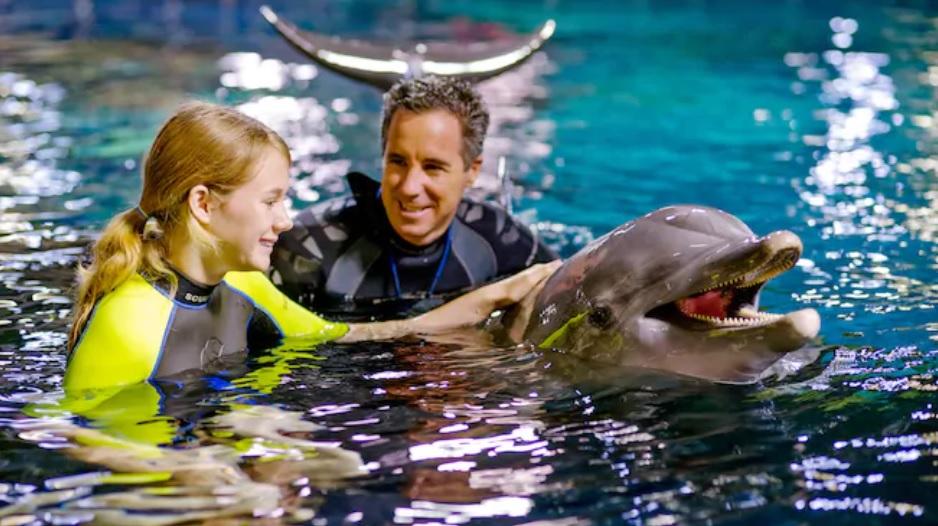 Disney dolphins