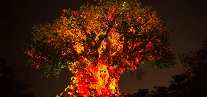 Tree Of Life Awakenings Projection Show At Animal Kingdom To Get Lion King Themed Makeover Mickeyblog Com