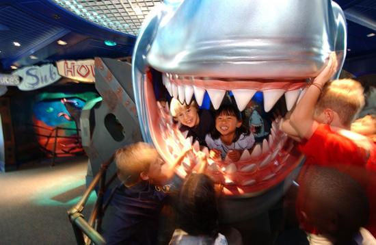 Bruce's Shark World