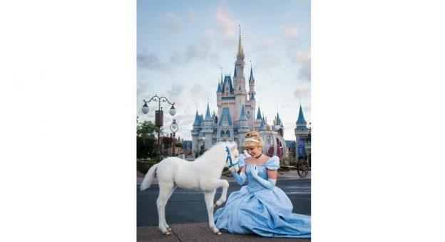 Cinderella Pony