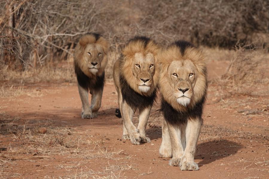 Adventures by Disney African Safari