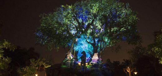 Florida theme parks reopening