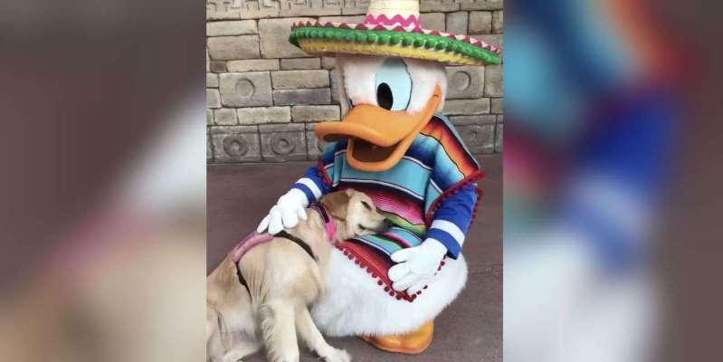 Nala and Donald
