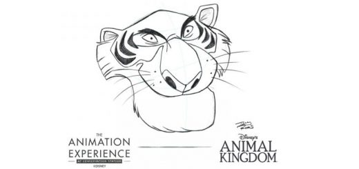 Animation Experience