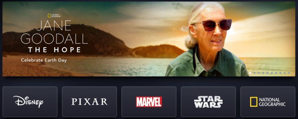CEO of Netflix