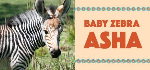 Baby Zebra Name