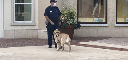 Disney Springs security guard
