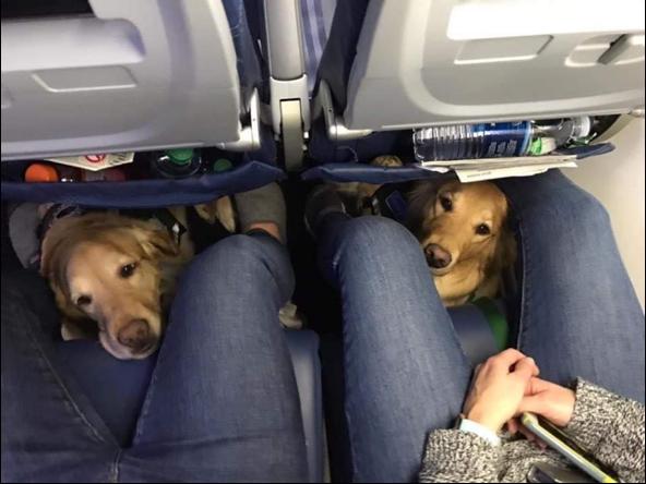 Disney service dogs
