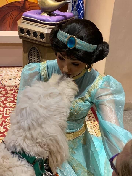 Service dogs at Disney