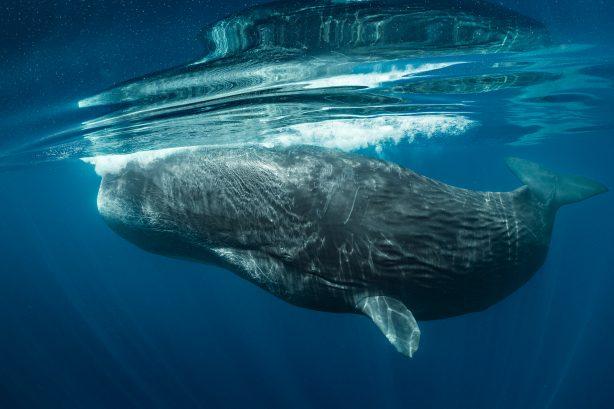 Disney Secrets Whales