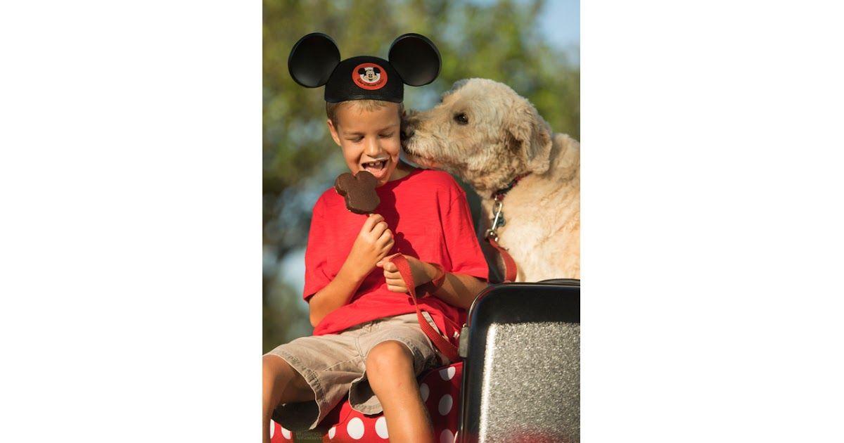 Mickey Bar Dog