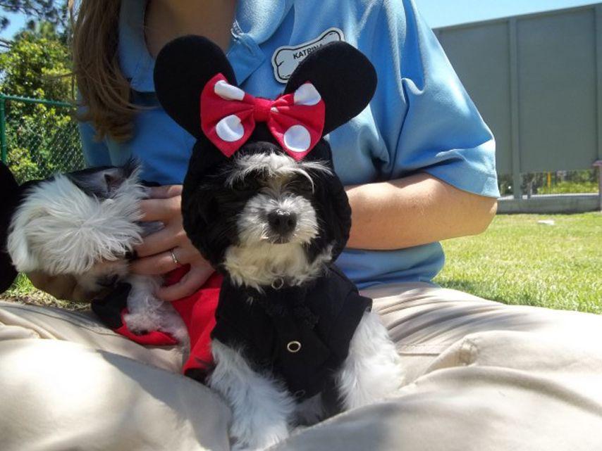 Minnie Dog