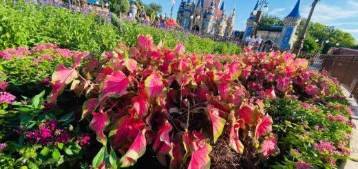 hub planters magic kingdom